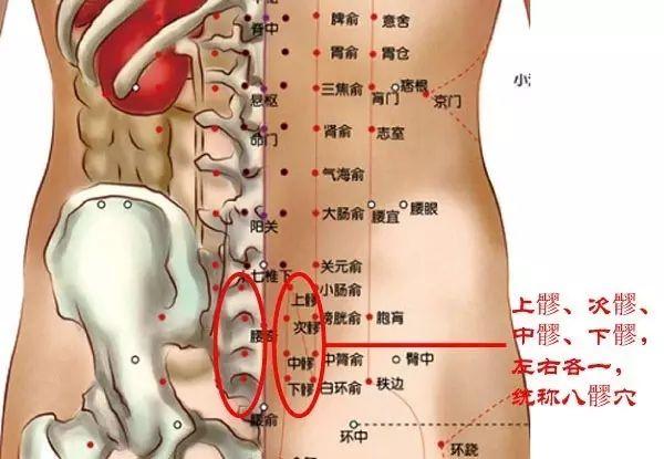 腰部的穴位